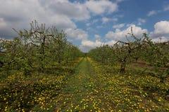 果树果树园在春天,波兰 库存照片