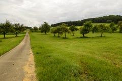 果树果树园在绿色乡下, Baden Wuttenberg, G 免版税库存图片
