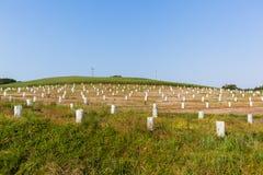 年轻果树种植园 免版税库存照片