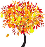 果树,果树园树,树传染媒介 库存照片