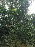 果树 库存图片