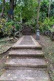 果阿Gajah圣所雨福雷斯特Ubud,巴厘岛 库存图片