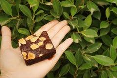 果仁巧克力在手中在绿色叶子背景  图库摄影