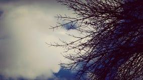 枝杈和云彩 免版税图库摄影