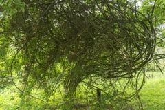 枝杈和分支和一点叶子 库存照片