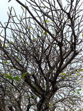 枝杈在秋天 库存照片