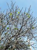 枝杈在秋天 免版税库存照片