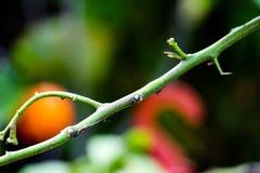 枝杈接近的视图在庭院里 库存图片