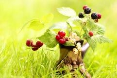 枝杈用莓果 库存图片