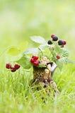 枝杈用莓果 免版税库存照片