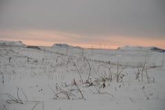 枝杈黏附在这个积雪的领域的雪外面在冰岛 免版税库存照片