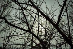 枝杈 树 春天 天空 库存照片