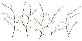 枝杈 图库摄影
