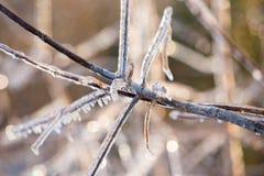 冻结枝杈 库存照片
