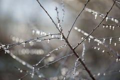 冻结枝杈 免版税图库摄影