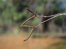 枝杈 库存图片