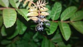 枝杈wilter若虫在晚上 库存图片
