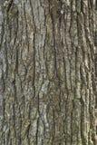 枞松树木皮肤纹理 库存照片