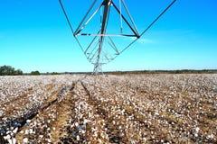 枢轴完全成功在棉花领域准备好收获 免版税库存图片