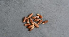 枣椰子种子  库存照片