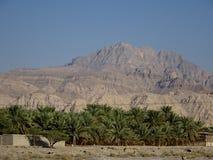 枣椰子绿洲在沙漠-哈伊马角,阿联酋路视图  库存照片