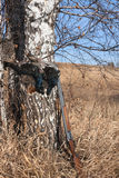 枪比赛和黑松鸡 免版税库存照片