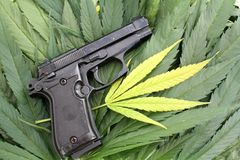 枪罪行非法大麻概念性照片和大麻生叶 免版税库存图片
