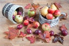 枫叶、苹果、梨和自然其他礼物  仍然秋天生活 免版税库存图片