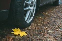 枫叶、轮子和轮胎特写镜头在肮脏的秋天路 图库摄影