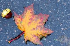 枫叶和栗子在水坑 苹果秋天对光检查袋装花瓶的构成干燥叶子 免版税库存图片