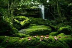枫叶和青苔植物 图库摄影