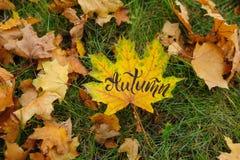 枫叶在秋天公园 免版税库存图片