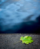 枫叶说谎表面,在蓝色背景的绿色叶子,在水附近的一片唯一叶子上 库存图片
