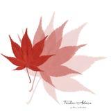 枫树拼贴画离开红色 免版税库存图片