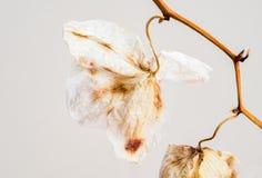 枯萎的兰花兰花植物花开花 免版税库存图片
