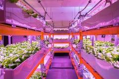 架子用在结合鱼水产养殖的aquaponics系统的莴苣与水栽法,栽培植物在水中 图库摄影