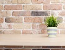 架子的盆的植物在砖墙前面 库存照片