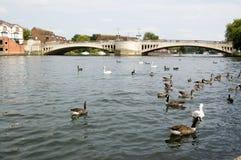 柏克夏桥梁caversham读取 免版税图库摄影