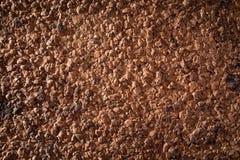 黄柏吠声纹理作为地球土壤的部分 图库摄影