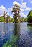 柏天然泉结构树 免版税库存照片