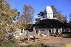 柏林动物园 免版税库存图片