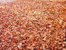 柏林在秋天 库存照片