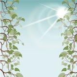 在太阳光芒,传染媒介例证的叶子 图库摄影
