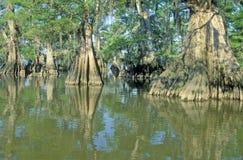 柏树在多沼泽的支流,湖Fausse Pointe国家公园,路易斯安那 库存图片