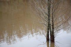 柏树在水中 图库摄影