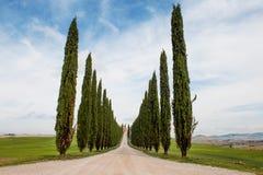 柏树荡桨和在托斯坎风景的路,托斯卡纳,意大利 免版税库存照片