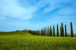 柏树行和一条白色路,农村风景在锡耶纳,托斯卡纳,意大利附近的val d Orcia土地 免版税库存图片