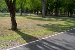 柏油路以森林自然绿色 库存照片