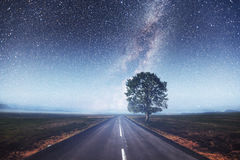 柏油路和偏僻的树在繁星之夜天空下 免版税库存照片