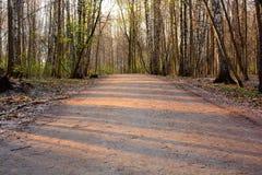 柏油路在一个树木繁茂区 免版税库存照片